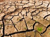 Cracks soil — Stock Photo