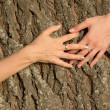 Hands  female  embracing   tree — Stock Photo