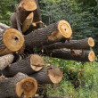 Logs  wood   trunk   tree — Stock Photo