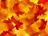 叶树枫 — 图库照片