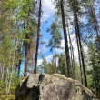 Reserve Kolovesi. Finland — Stock Photo