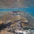 Underwater Scene of Great Barrier Reef — Stockfoto