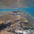 Underwater Scene of Great Barrier Reef — Stok fotoğraf