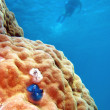 Underwater Scene of Great Barrier Reef — Stock Photo