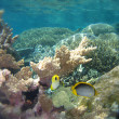 Stock Photo: Underwater Scene of Great Barrier Reef