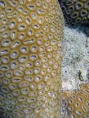 Underwater Life of Great Barrier Reef — Stock Photo