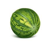 Vector watermelon — Stock Vector