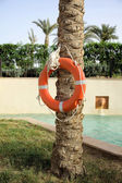 Lifebuoy on a tree — Stock Photo