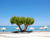 Tree on the beach at luxury hotel — Stock Photo