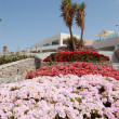 Terrace with flowers at recreation area of luxury hotel, Crete, - Foto de Stock