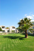 Palm tree on the lawn at luxury hotel, Crete, Greece — Stock Photo