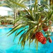 Tropical plant with fruits at swimming pool of luxury hotel, Pat — Stock Photo