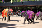The famous elephant show in Nong Nooch tropical garden — Stock Photo
