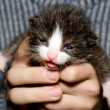 Kitten in hand. - Stock Photo