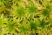 Green moss on a bog — Stock Photo
