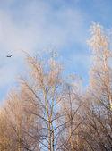 Winter frosty morning — Stock Photo