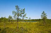 Paesaggio estivo selvatici — Foto Stock