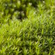 Royalty-Free Stock Photo: Green moss after a rain