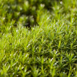 Green moss after rain — Stock Photo #3101815
