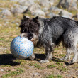 Plays with a ball — Stock Photo