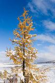 Autumn and winter — Stock Photo