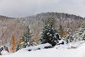 Eerste sneeuw — Stockfoto