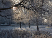 Winter dawn — Stock Photo