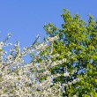 Stock Photo: Three colors of spring