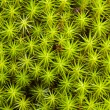 Green moss background - 