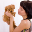 The puppy has turned away — Stock Photo