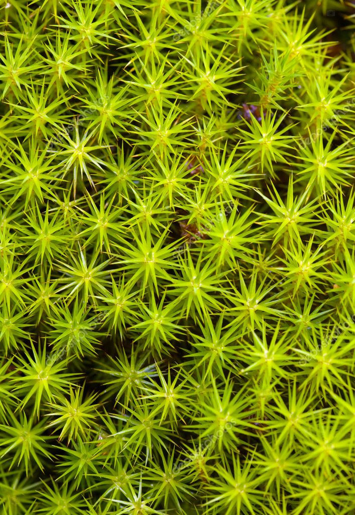 Background from a green moss on a bog — Lizenzfreies Foto #3352920