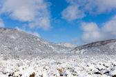 Primeira neve — Foto Stock