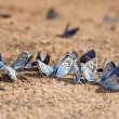 Stock Photo: Beach for butterflies