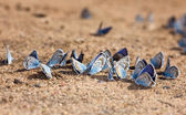 Beach for butterflies — 图库照片