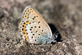 The butterfly on a stone — Stock Photo