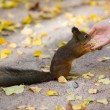 Feeding of the squirrel — Stock Photo