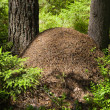 Stock Photo: Big ant hill