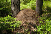 The big ant hill — Stock Photo