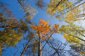 Autumn sunny wood — Stock Photo