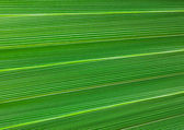 Fondo verde — Foto de Stock