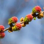 Spring diagonal — Stock Photo