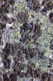 Rock with a black lichen — Stock Photo