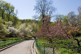 The Kiev Botanical garden — Stock Photo