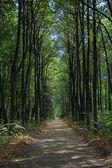 Il percorso solitario — Foto Stock