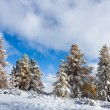 Autumn trees under snow — Stock Photo