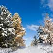 Two seasons — Stockfoto #3786593