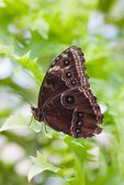 The butterfly take a rest — Stock Photo
