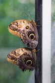 Couple of butterflies on the frame — Foto de Stock
