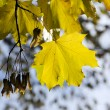 Gilding autumn — Stock Photo #3880272