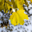 The gilding autumn — Stock Photo
